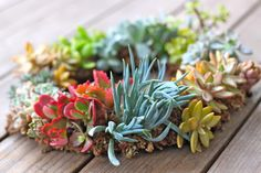 how to make a living succulent wreath