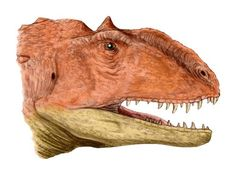 Tyrannosaurs and raptors made up only a small percentage of the bipedal, carnivorous dinosaurs known as theropods, which included such exotic families as ceratosaurs, abelisaurs, megalosaurs and allosaurs, as well as the earliest dinosaurs of the Triassic period. The exact evolutionary relationships among these theropods is still a matter of debate, but there's no doubt they were equally deadly to any herbivorous dinosaurs (or small mammals) that wandered across their path