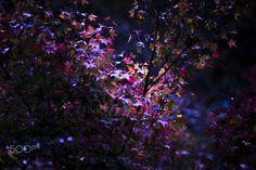 Amethyst color - Maple colors like Amethyst. It was a nice purple fall foliage.