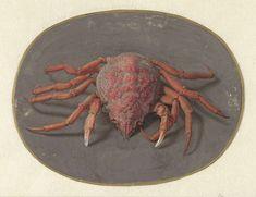 Jan Augustin van der Goes | Krab, Jan Augustin van der Goes, 1690 - 1700 |