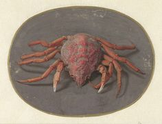 Jan Augustin van der Goes | Krab, Jan Augustin van der Goes, 1690 - 1700 |
