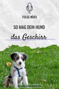 Dogs, Kind, Tricks, Animals, Community, Dog Accessories, Cat Breeds, Happy Animals, Dog Training School