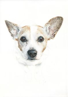 Jack Russell. Illustration pencil. Ilustración lápiz. Dog portrait Jack Russell, Color Pencil Art, Colored Pencils, Corgi, Illustration, Portrait, Drawings, Artwork, Animals