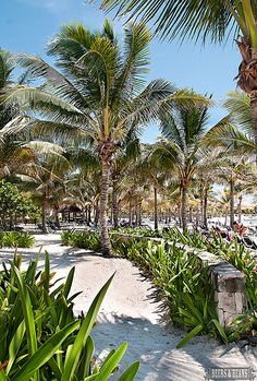 Ahhh... Mexico - I love the palm trees and white sand beaches of the Riviera Maya!