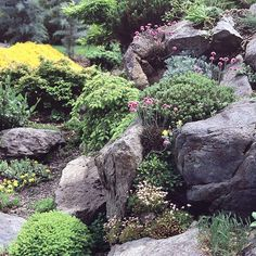 Sculptural Beauty    As you choose plants and design your garden, consider form as well as color. Pair perennial favorites with dwarf conifers that bring year-round texture and height to the scene. In this rocky site, the bright pink blooms of perennial sea thrift (Armeria maritima) softly enhance the sculptural forms of dwarf conifers and large boulders.
