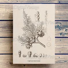 Printable art Vintage botanical print Tree от LizasDigitalVintage
