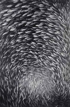 Wayne Levin Photography - From the Fish Schools series. ☀