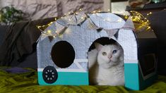 I made a Campurr Van for my Turkish Van cat, Darwin, out of a grocery delivery box, some string lights, and craft paint. This cardboard cat house was easy to make and the cat LOVES it. Turkish Van Cats, Cardboard Cat House, Cat Cave, Craft Paint, Darwin, String Lights, Delivery, Bird, Christmas Ornaments