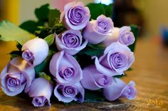 Purple is my favorite color. I hope to have purple roses growing in my garden one day. Beautiful Rose Flowers, Amazing Flowers, Love Flowers, Purple Flowers, Flowers Pics, Colorful Roses, Purple Love, All Things Purple, Purple Stuff