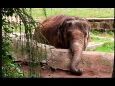 Earthcast SOS Nosey Safe at Elephant Sanctuary - YouTube