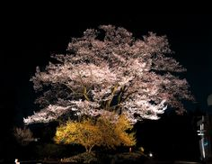 安富桜 長野県飯田市 #Japan #Nagano #Iida-shi #Minami-shinshu