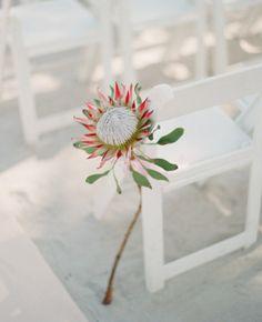 Wedding Ideas - Protea : Protea, garden rose, and eucalyptus bouquet Safari Wedding, Nautical Wedding, Protea Wedding, Floral Wedding, Wedding Bouquet, Wedding Flower Guide, Wedding Flowers, Key West Wedding, Beach Wedding Inspiration