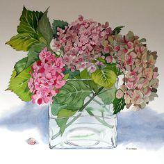 Botanical Flower Watercolour Hydrangea Pink by michelewebber