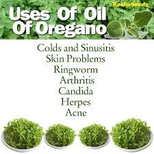 The great oregano oil -The strongest antiseptic nature
