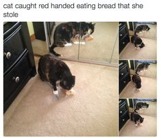 Bread | 23 Of The Most Random AF Things People Caught Their Cats Eating
