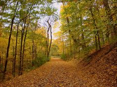 Hiking Warner Park....Nashville TN
