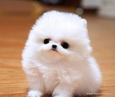 Cute fluffy thing xx