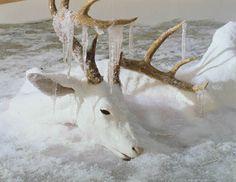 Erick Swenson_untitled deer