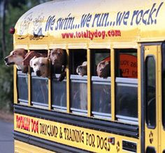 Totally Dog® campers start their day with a fun bus ride on the original, first-of-its-kind Doggie Bus™. We pick our campers up in the morning and drop them off Beagle, Indoor Dog Park, Pet Sitting Business, Dog Grooming Salons, Pet Grooming, Dog Playground, Dog Kennel Cover, Pet Hotel, Pet Resort