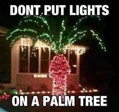 Dont put lights on a palm tree christmas christmas lights christmas decorations christmas humor funny christmas Funny Christmas Pictures, Funny Pictures, Funny Pics, Funniest Pictures, Awkward Pictures, That's Hilarious, Hilarious Pictures, Funny Images, Bing Images