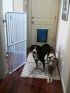 Tall Indoor Pet Gates For The Home Or Office. Rover Company manufactures the best Tall Indoor Pet Gates on the market today in the USA. Tall Indoor Pet Gates are very important especially when you have both cats and dogs in a house. Cat Gate, Diy Dog Gate, Extra Tall Pet Gate, Tall Dog Gates, Indoor Dog Gates, Dog Barrier, Tallest Dog, Animal Room, Dog Cat
