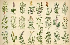 A great free PDF of herbal remedies from 1814!!! So good info!