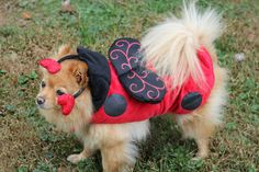 "Office dog Teddy says, ""I'm not a lady bug, I'm a *gentleman* bug!  Thanks, @PetSmart!"""