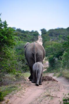La Vida es.. Pasión: Mis favoritas de National Geographic 2010 Categoría Naturaleza
