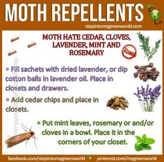 Getting rid of moths