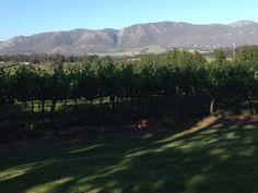 Belfield Wines Elgin South Africa