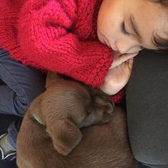 Assim sabe melhor dormir a sesta 💤🐾❤️  #dogsandkids #happykids #dogslovers #labrador #chocolate    #Regram via @umblogfashion Dogs And Kids, Happy Kids, Labrador, Lily, Chocolate, Animals, Instagram, Fashion, Happy Children