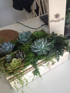 Succulents in a wine box. Doing a little decor for the Big Red Fest at Danza del Sol Winery! #succulents #danzadelsolwinery #succulentcenterpieces #wineryweddings