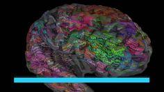 El cerebro tiene un atlas para las palabras (El País)  Un estudio demuestra que las palabras similares activan las mismas áreas cerebrales y que el lenguaje no solo es cosa del lado izquierdo del cerebro