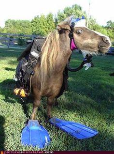 Seahorse.... badoom-cha!