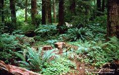 north american forest garden