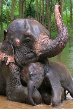 Save the elephants! The Animals, Cute Baby Animals, Funny Animals, Wild Animals, Elephants Never Forget, Save The Elephants, Elephants Playing, Beautiful Creatures, Animals Beautiful
