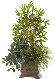 Mixed Mini Bamboo, Fittonia and Springeri Floor Plant in Planter