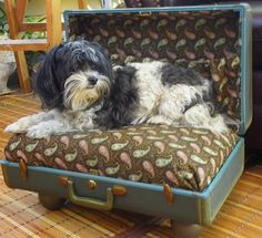 a vintage suite case gets a new life as a pet bed, repurposing upcycling, Well Molly likes it And YES she did need a bath Diy Dog Bed, Diy Bed, Vintage Trunks, Vintage Suitcases, Vintage Luggage, Pet Beds, How To Make Bed, Diy Stuffed Animals, Your Pet