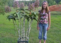 I'd give my life to get orchids that can grow as big as this one.