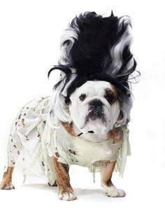 Wonderful Photos of Dogs in Crazy Costumes
