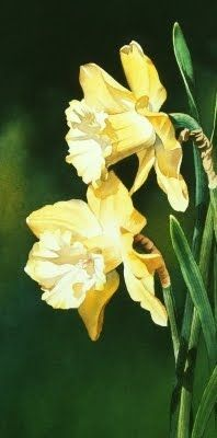 Spring Flower Week and Daffodil Friends - Watercolor, original painting by artist Jacqueline Gnott | DailyPainters.com