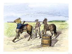 Pony Express Rider Changing Horses at a Relay Station Giclee Print