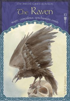 Daily Oracle Card Pick - Colette Baron-Reid | Intuitive, Psychic Medium, Author…