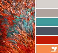 feathered hues color palette from Design Seeds Colour Pallette, Color Palate, Color Combos, Color Schemes Colour Palettes, Red Colour Combination, Best Color Combinations, Orange Color Palettes, Bright Color Schemes, Grey Palette