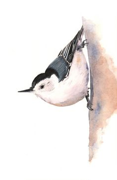 Nuthatch painting 3 watercolor painting  A4 print by LouiseDeMasi, $20.00