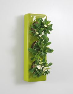 ✿✿✿ Our Ceramic for three miniature plants - in several colors ✿✿✿ www.flowerbox.de