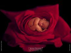 Anne Geddes Baby Photogaphy -  Anne Geddes Babies,  Flower Babies  1024*768   Wallpaper 11