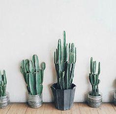 I really need a big cactus.