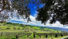This was the view from the deck of Rusack Winery this Wednesday located in the Santa Barbara Wine Country. Wine Country, Acre, Countryside, Oregon, Vineyard, Outdoor, Beautiful, Outdoors, Mornings