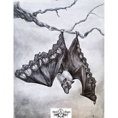Bat Illustration- Beautifully dysfunctional- Leather and Lace- Bat- Nature- Pencil drawing- April Alayne by AlwaysAprilAlayne on Etsy https://www.etsy.com/listing/555367086/bat-illustration-beautifully